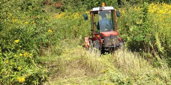 Bekaempelse-gyldenris-slaaning-med-traktor-7A