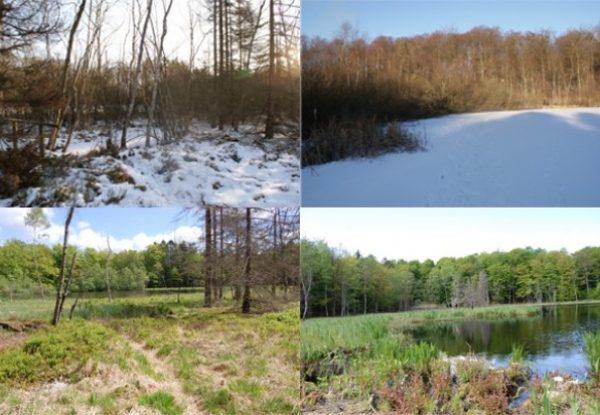 Naturstyrelsen-naturpleje-trim
