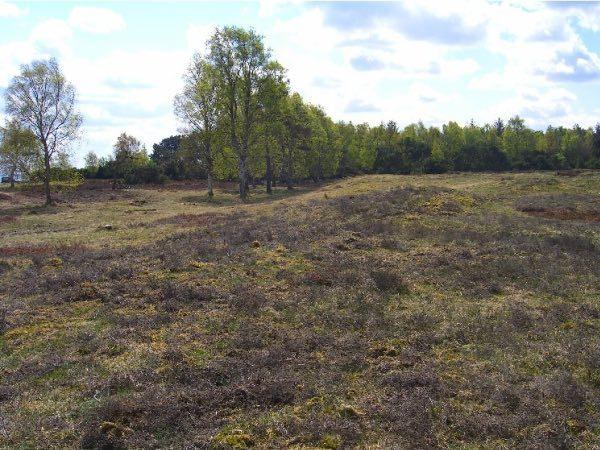 Solroed-kommune-naturpleje-1a