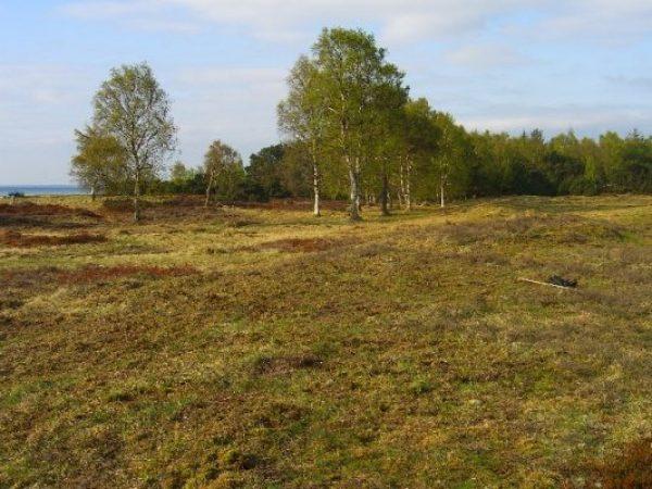 Solroed-kommune-naturpleje-1b